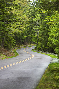 Country road in Maine