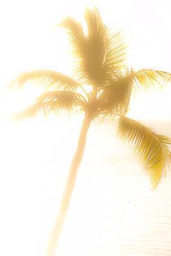 USA, Florida, Boca Raton, Silhouette of palm tree against sea at sunrise - 1178-31822
