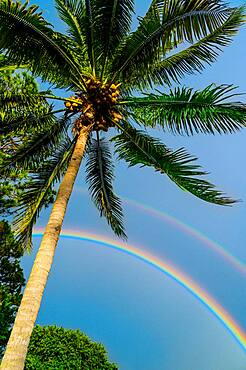 Palm tree and double rainbow on blue sky