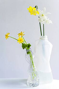 Spring flowers in crushed recycled plastic bottles