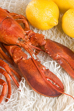 Still life of lobster and lemons