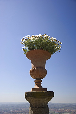Flower pot Florence Italy