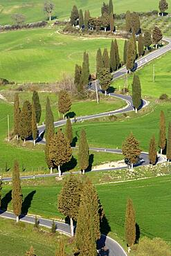 Italy, Tuscany, Val D'Orcia, Pienza, Cypresses along winding road on green hill