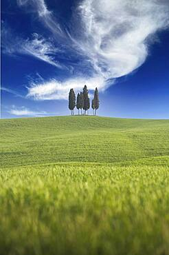 Italy, Tuscany, Val D'Orcia, Cypresses in green field