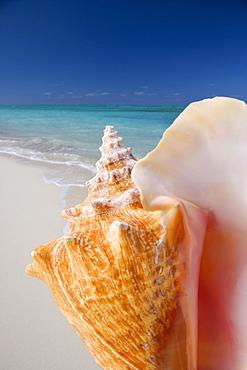 Still life of seashell at beach