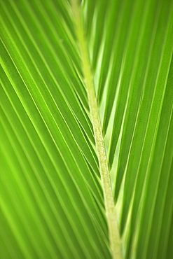 Close up of a leaf