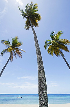 View to sea from beach with palm trees in foreground, British West Indies, Antigua