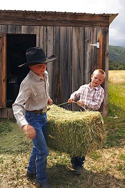 Boys collecting hay, USA, Colorado