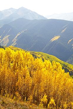 Autumn landscape with aspen trees, Colorado, United States