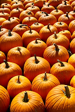 Pumpkins, full frame