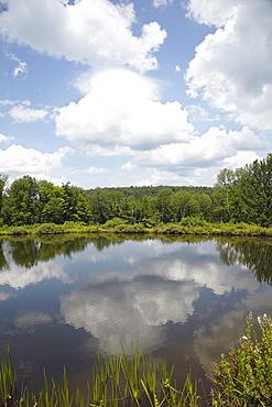 Lake among trees, USA, New York, Roscoe