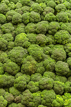 Stack of broccoli