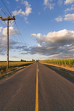 Empty road in diminishing perspective, Marion County, Oregon