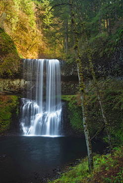 Silver Falls State Park, View of waterfall in forest, Silver Falls State Park,Oregon
