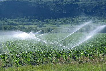 Irrigation system, British Columbia, Canada, North America
