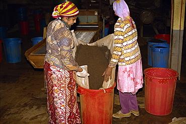 Tea production, Cameron Highlands, Malaysia, Southeast Asia, Asia