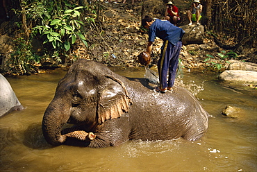 Mahout washing elephant, Elephant Camp near Chiang Mai, Thailand, Southeast Asia, Asia