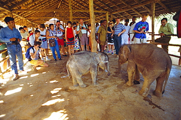 Pinnawala elephant orphanage, Sri Lanka, Asia