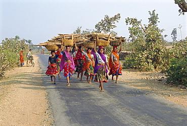 Collecting firewood, Dhariyawad, Rajasthan, India