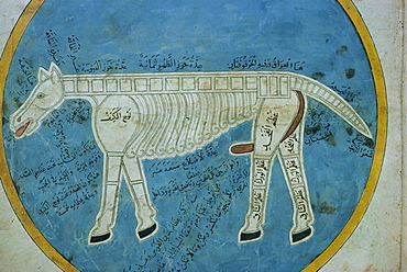 Manuscript showing anatomy of an animal, Mashad, Iran, Middle East
