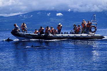 Whale-watchers & Atlantic Spotted Dolphins, Stenella frontalis. Azores, Portugal, Atlantic