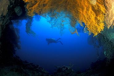 Cave, Sea Fans and Diver. Gorontalo, Sualwesi, Indonesia