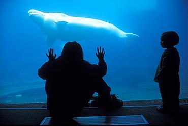 Beluga in tank & spectators. Stanley Park, Vancouver, Canada