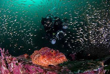 Scorpionfish, Glassy Sweepers & diver. Myanmar (Burma)