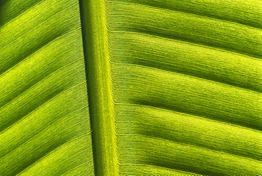 Leaf abstract, Indonesia