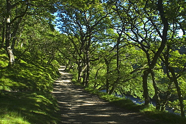 Path through Sessile oak (Quercus petraea) woodland next to East Lyn River, Devon, UK
