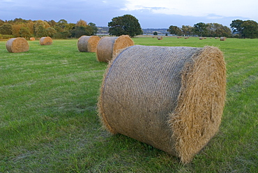 Straw bales in grass field at the end of summer, UK