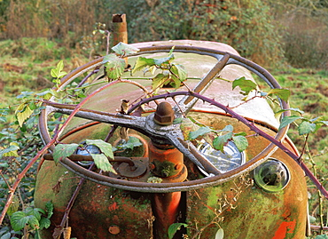 Abstract of disused tractor steering wheel with brambles, UK