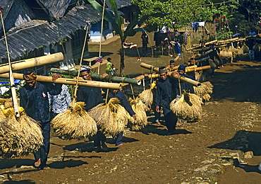 Kasepuhan musicians carrying rice bundles at annual rice festival Seren Tahun, West Java, Indonesia