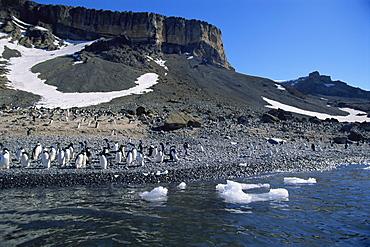 Adelie penguins (Pygoscelis adeliae) on land, Brown Bluff, Antarctica, Southern Ocean