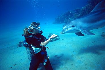 Bottlenose dolphin (Tursiops truncatus) underwater with trainer: Elke Bojanowsi, Dolphin Reef, Eilat, Israel, Read Sea
