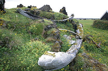 Upper and lower jaw bones (+ one rib) of a blue whale (Balaenoptera musculus) at an old whaling station. Snaefellsness Peninsular, Iceland.