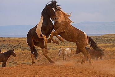Tameless Horses,