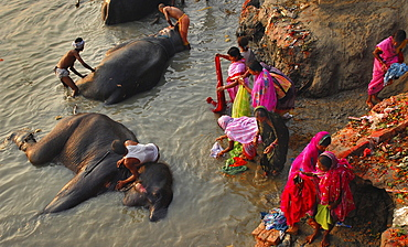 Elephants and women share the same  river banks to bathe and wash, Sonepur,Bihar, India