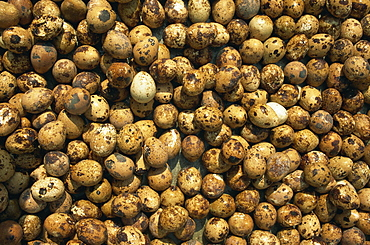 Birds' eggs for sale, Gulang Island, Shandong, China, Asia