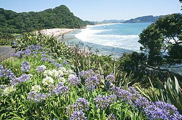 Hot Water Beach, Coromandel Peninsula, South Auckland, North Island, New Zealand, Pacific