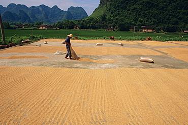 Drying grain near Yangshuo, China, Asia