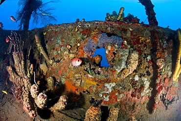 Coral encrusted porthole on the Lesleen M wreck, a freighter sunk as an artificial reef in 1985 off Anse Cochon Bay, St. Lucia, West Indies, Caribbean, Central America