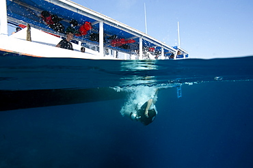 Diver back-rolling off a boat into the water, Komodo, Indonesia, Southeast Asia, Asia