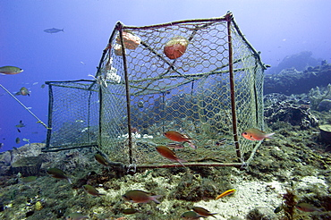 Fishing cage in Dominica, West Indies, Caribbean, Central America