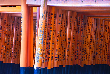 Vermilion torii gates, donated and inscribed by businesses and individuals, Fushimi Inari Shrine, Kyoto, Japan, Asia
