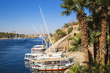 Gardens of Sofitel Legend Old Cataract hotel situated on the banks of the River Nile, Aswan, Upper Egypt, Egypt, North Africa, Africa