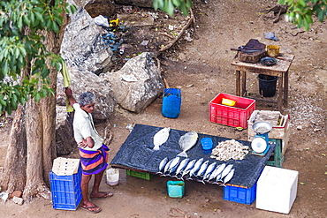 Fisherman selling fish at the fish market in the Old Town of Galle, Sri Lanka, Asia
