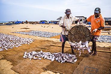 Negombo fish market (Lellama fish market), fishermen working, Negombo, West Coast, Sri Lanka, Asia