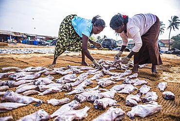 Women working in Negombo fish market (Lellama fish market), Negombo, West Coast, Sri Lanka, Asia