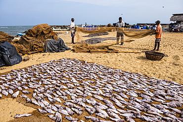 Fishermen drying out fishing nets in Negombo fish market (Lellama fish market), Negombo, West Coast, Sri Lanka, Asia